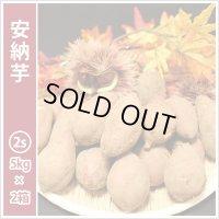 安納芋 コロコロ2Sサイズ(2箱セット)  通常3,300円がキャンペーン特価!